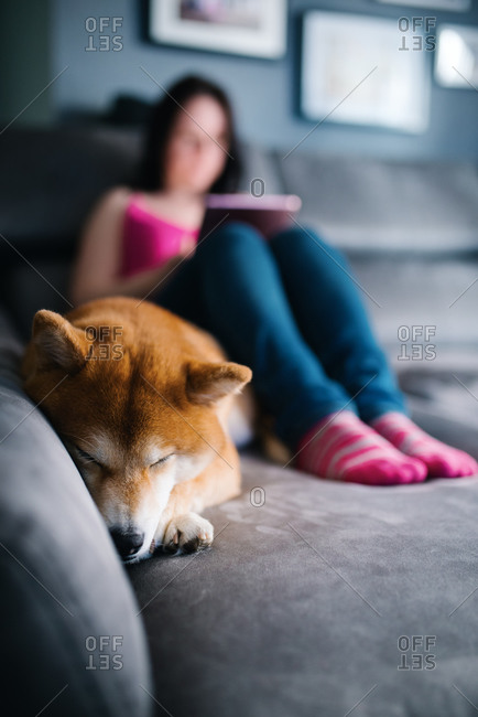 Focused female in casual outfit surfing tablet while sitting on cozy plush couch with and hugging cute Shiba Inu dog during free time at weekend day in cozy living room