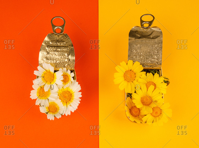 Top view of white and yellow daisy flowers arranged in reused metal tin cans of various shapes on colorful background