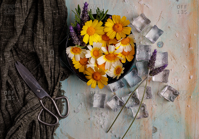 Top view composition of bunch of colorful daisies and lavender flowers in pot arranged near ice cubes and decorative cloth with scissors on shabby surface