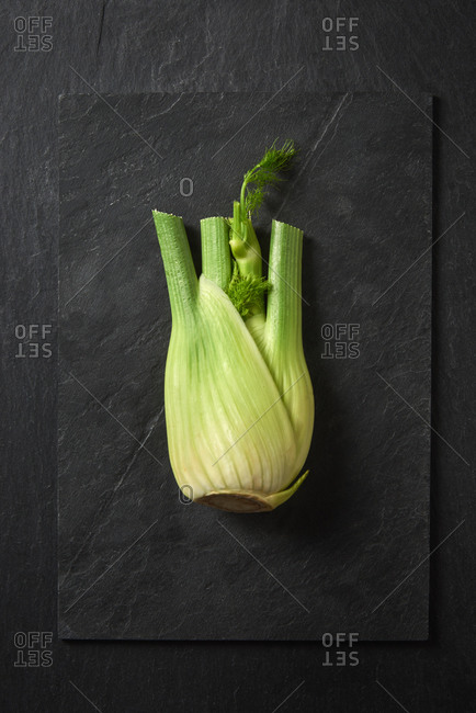 Freshly picked natural organic fennel flowering plant species on a black stone board, copy space. Healthy vegan food concept.