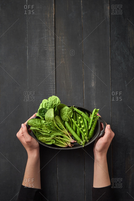 Female hands hold pan with freshly picked natural organic greenery spinach and pear pods above black wooden background, copy space. Top view. Vegetarian healthy food.