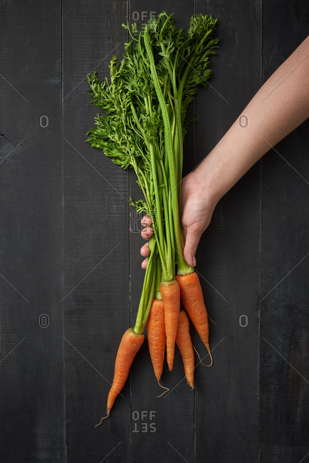 Woman hand holds bunch of home grown fresh natural organic carrot on a wooden dark background, copy space. Top view. Vegetarian healthy food.