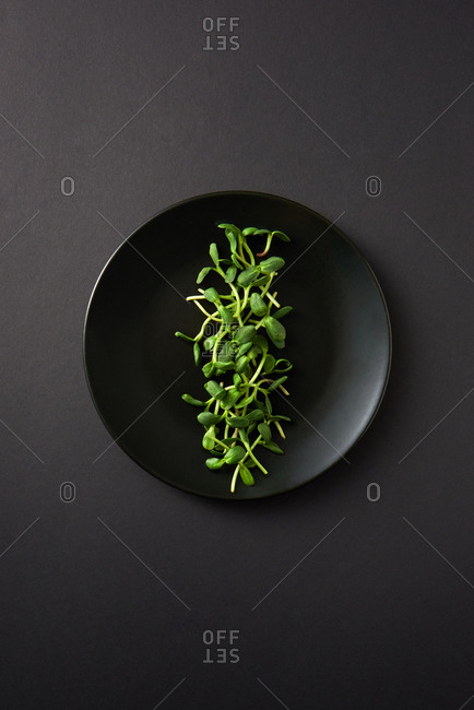 Growing fresh natural organic microgreen in a black ceramic plate on the same color background, copy space. Top view. Vegan super food.