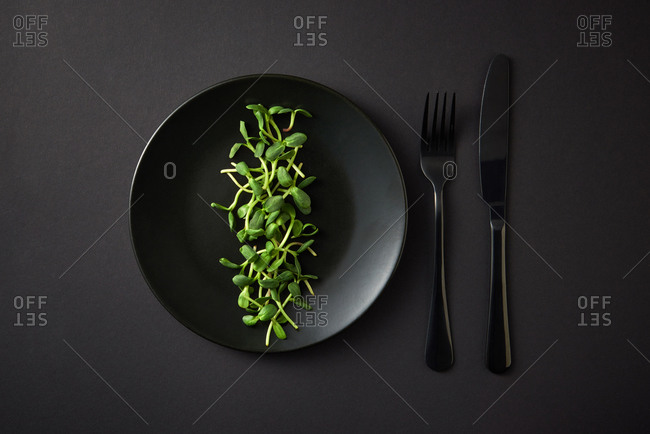 Freshly picked growing natural organic microgreen sprouts in a black ceramic plate served with fork and knife on the same color background, copy space. Top view. Vegan super food.