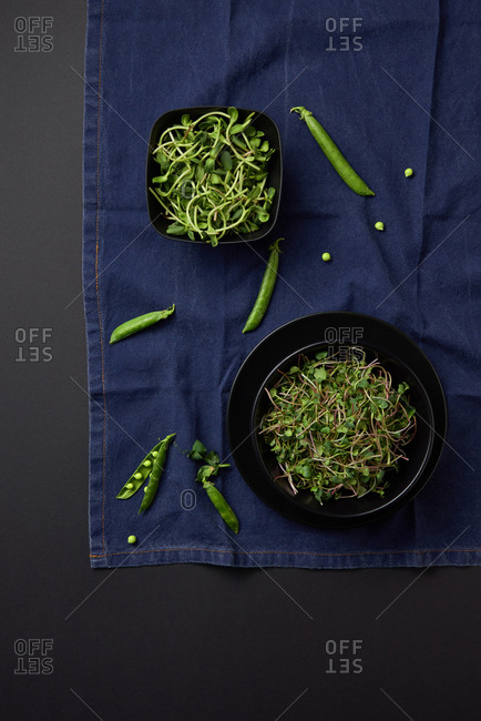 Home grown fresh natural organic microgreen sprouts in a black ceramic plates on a blue napkin on a black background, copy space. Top view. Vegan super food.