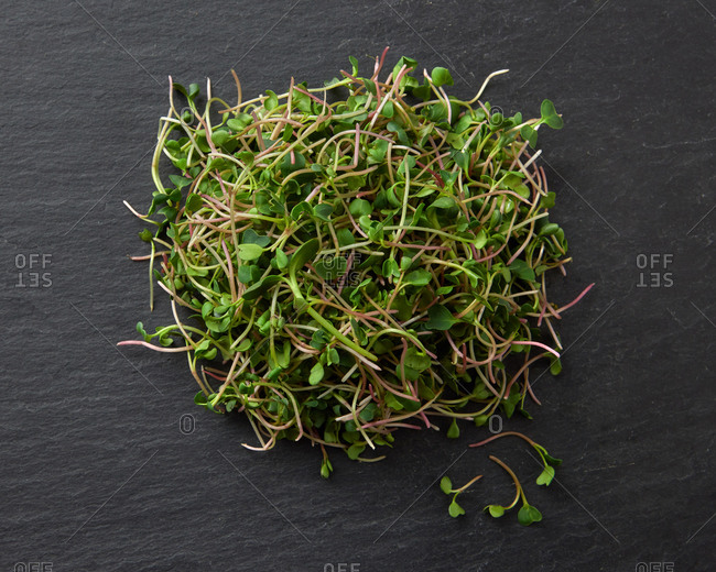 Bunch of home grown fresh natural organic microgreen sprouts on a black stone background, copy space. Top view. Vegan super food.