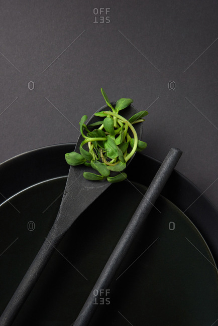 Wooden utensils spoon with growing natural organic microgreen sprouts on a black ceramic bowls on the same color background, copy space. Close-up top view. Vegetarian super food.