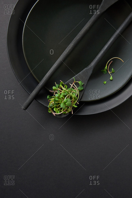 Wooden black spoons on a ceramic plate set with growing natural microgreen sprouts on a black background, copy space. Top view.