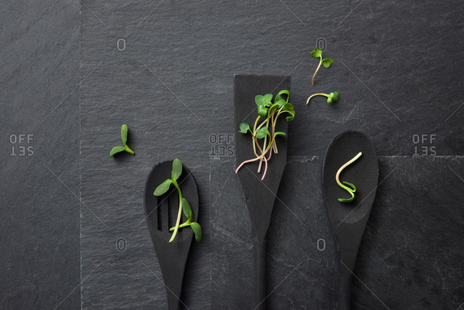 Horizontal composition from three wooden spoons with freshly picked natural organic microgreen sprouts on a black stone background, copy space. Top view.