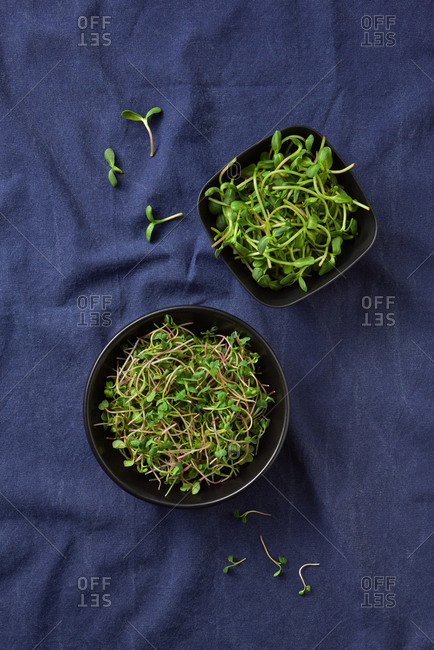Home grown fresh natural organic microgreen sprouts in a ceramic plates on blue textile napkin background, copy space. Top view. Vegetarian super food.
