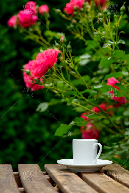 Cup of espresso coffee on a wooden table near pink roses in a garden