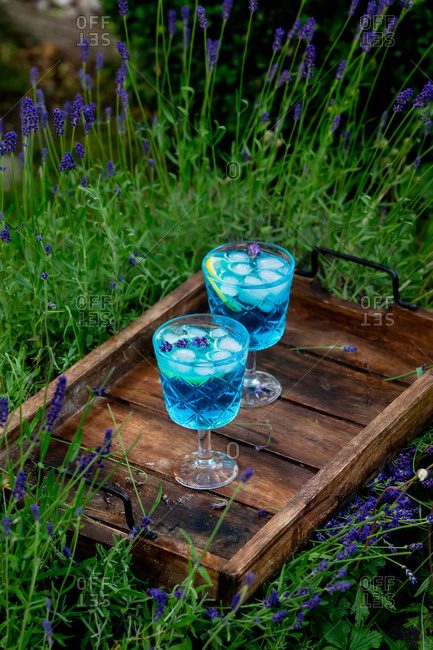 Two blue cocktail with ice and lavender on a tray in a garden