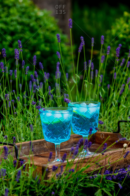 Two blue alcoholic beverages with ice and lavender on a tray in a garden