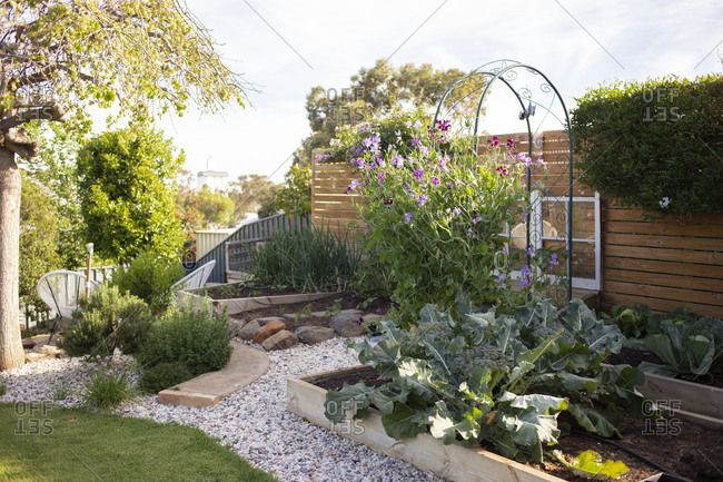 Backyard garden with plants and flowers blooming in summertime