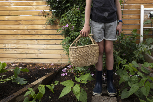 Boy holding basket in a backyard garden