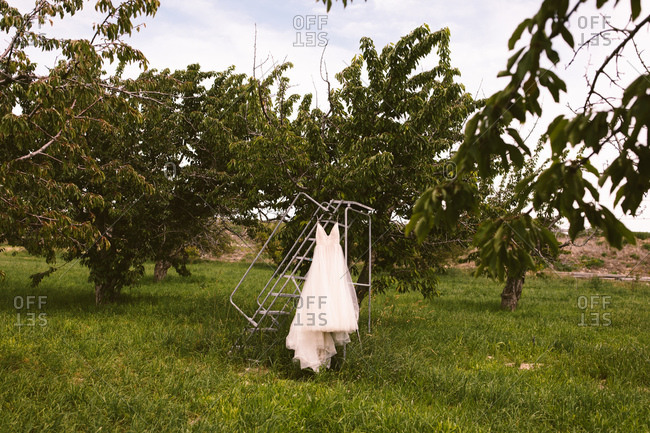 Wedding dress hanging in a cherry orchard
