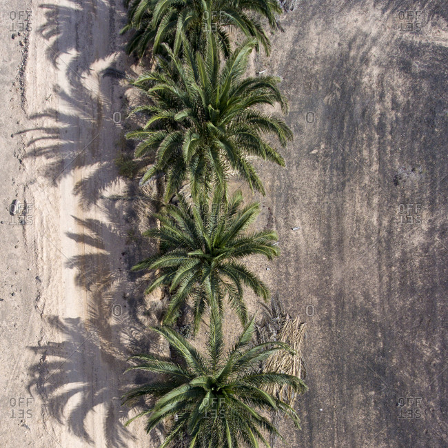 Row of a palm trees seen from above