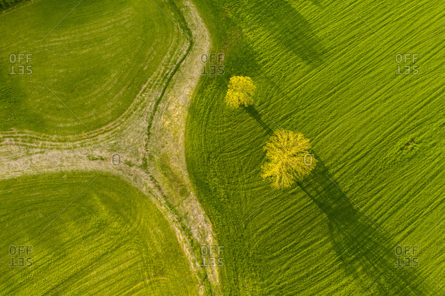 Aerial view of landscaped park with yellow tree Vermont