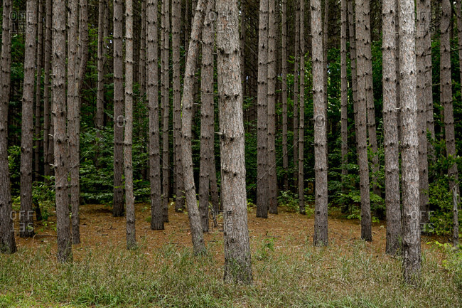Forest in Sleeping Bear Dunes National Lakeshore, Empire, Michigan, USA