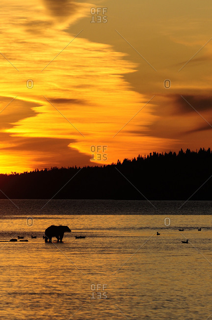 Grizzly bear lake at sunset in Katmai National Park, Alaska, USA