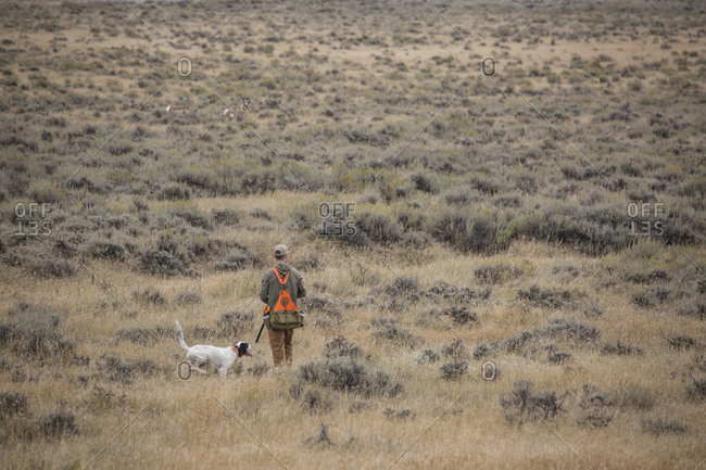 Man upland bird hunting with his dogs in the plains of northeastern Montana.