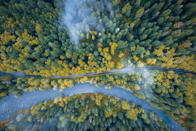 Amazing pine tree forest river and the road from above