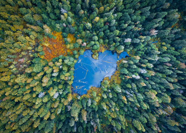 Beautiful nature from above, pine trees and mountain lake