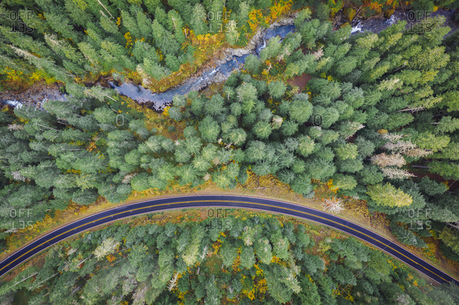 Amazing Pacific northwest pine forest from above