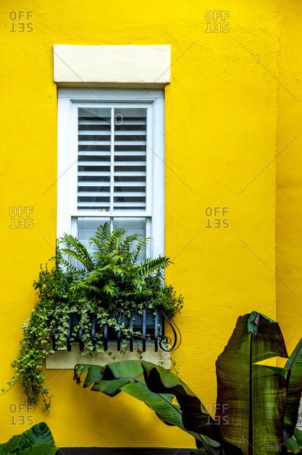 Yellow wall with window and potted plant, Charleston, South Carolina, USA