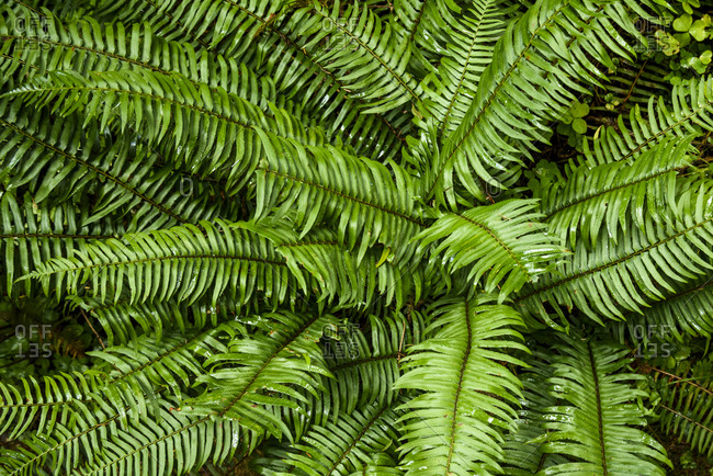 Photograph of green fern in the outdoors