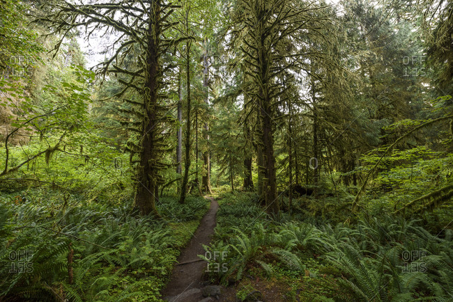 Beautiful shot of the Hoh Rainforest