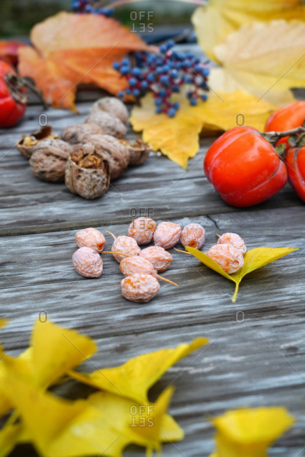 The fruits of the autumn harvest