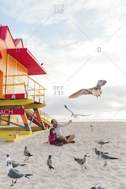 Father feeding seagulls while sitting with daughter at Miami beach- Florida- USA
