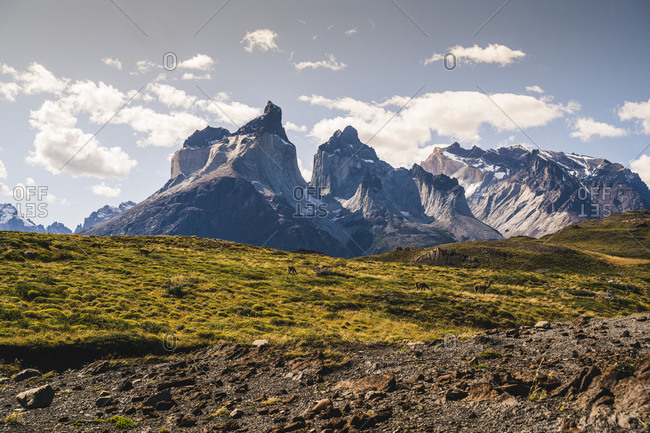 Chile- Guanacos (Lama guanicoe)grazing in Torres Del Paine National Park with Cuernos Del Paine in background