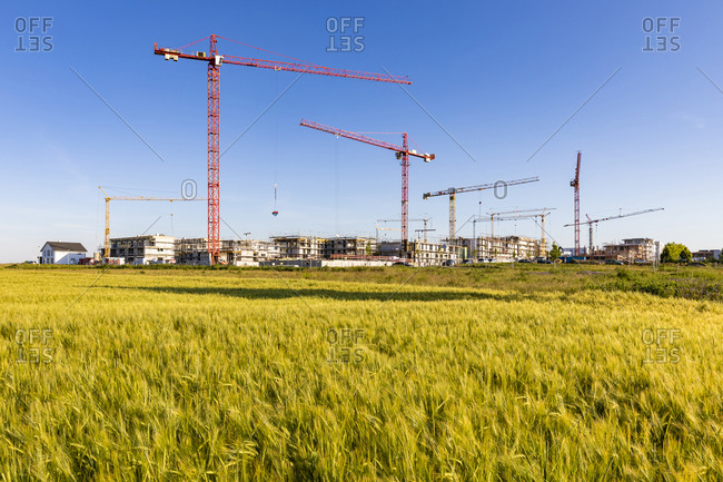 Germany- Baden-Wurttemberg- Holzgerlingen- Yellow grassy field with construction site in background