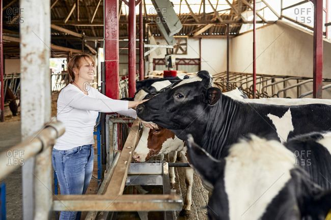 Smiling mid adult woman stroking cow while standing in barn