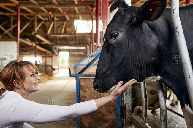 Smiling female farmer stroking black cow in dairy farm