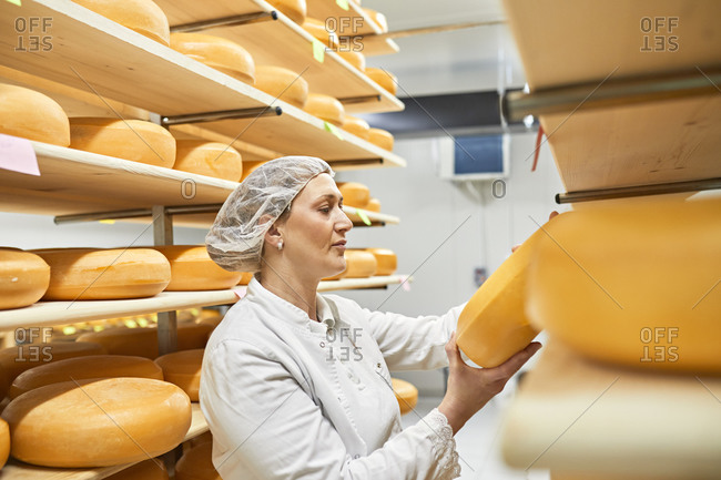 Cheese factory- female worker with cheese wheel in storeroom