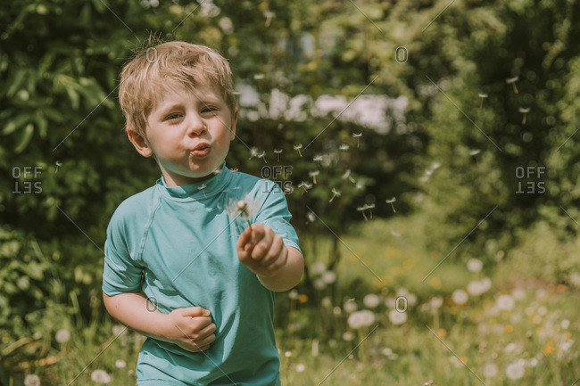 Cute blond boy blowing dandelion seeds while standing at garden on sunny day