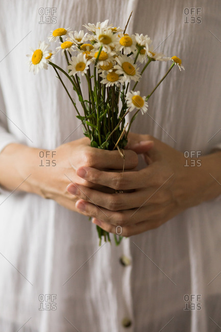 Close up of a woman holding fresh picked margarita flowers