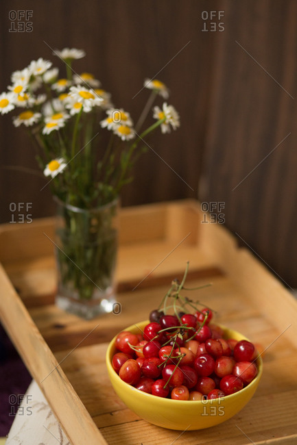 Bowl with fresh picked cherries and flowers on wooden tray