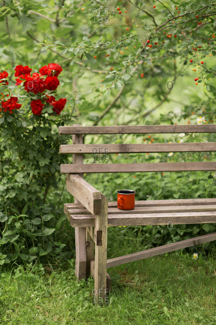 Red coffee mug on wooden bench by cherry tree in garden
