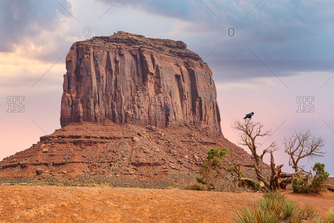 View of Elephant Butte AKA Merrick Butte and a raven on a tree in Monument Valley, Arizona