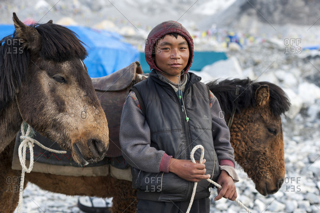 Everest Base Camp, Namche, Khumbu, Everest Region, Nepal - May 20, 2009: A Nepali boy minds his donkeys after bringing supplies to Everest base camp during the climbing season
