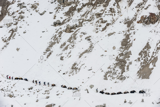 Yaks arrive with supplies for the mountaineers at Everest base camp