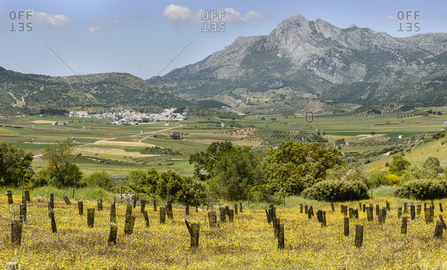 Andalucia countryside, Spain landscape image