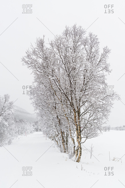 Winter in Norway landscape image