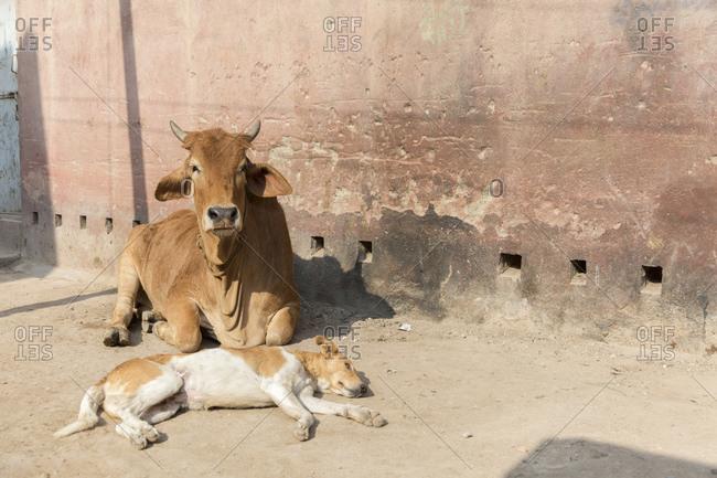 Street scene, Bikaner, Rajasthan, India