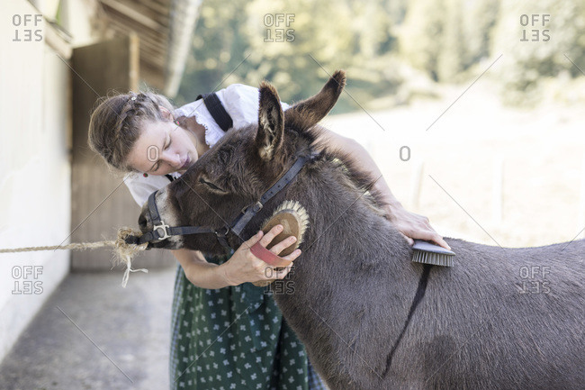 Farmer with dirndl brushes a donkey