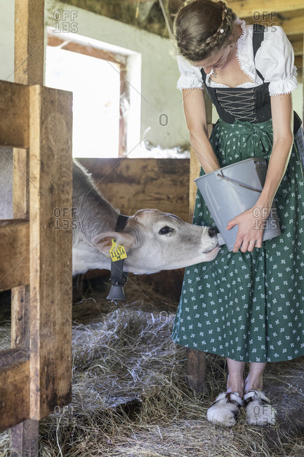 Farmer with dirndl feeds a calf